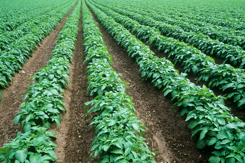HumberPalmers High Efficiency Fertilisers
